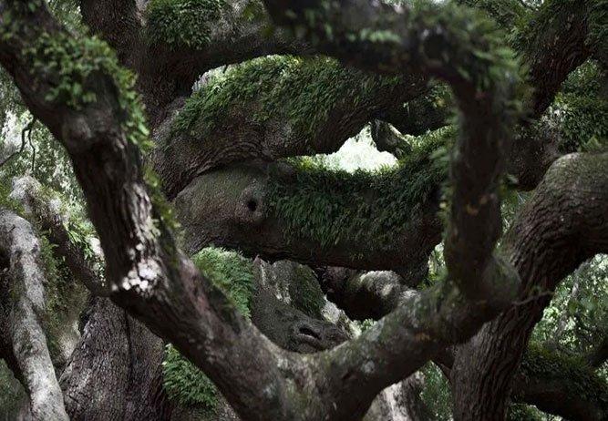 180 yıllık ağacı kaldıran karı kocaya rekor ceza geldi