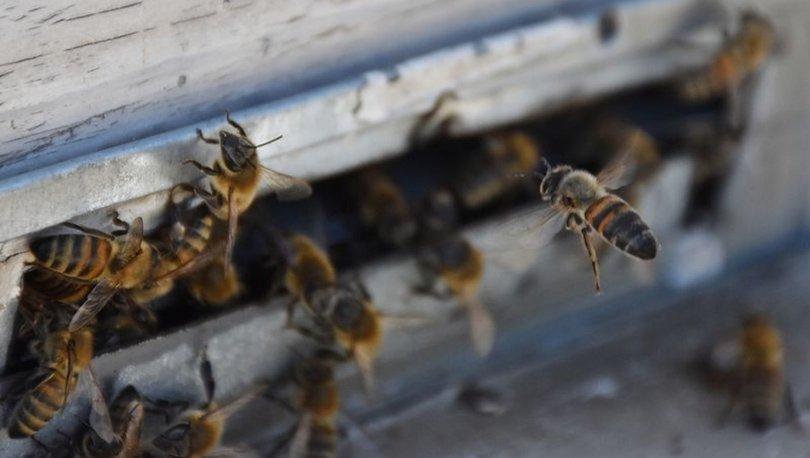 Photo of Arının Soktuğu Kişi Hayatını Kaybetti